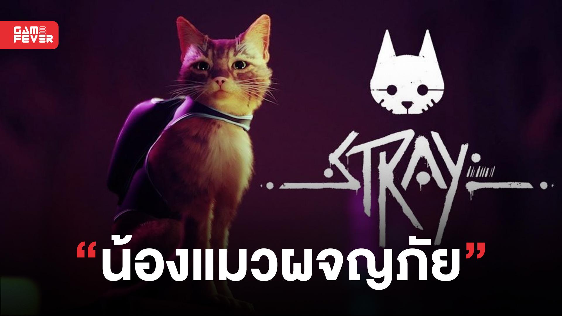 Stray ชวนคุณมารับบทเป็นเจ้าแมวเหมี้ยวขนปุย บุกผจญภัยในโลกหุ่นยนตร์สุดลึกลับ!